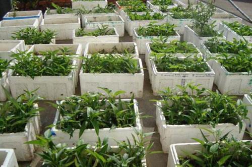 泡沫箱种菜有毒吗 可以在泡沫盒中种花吗?情商高的人可以一目了然