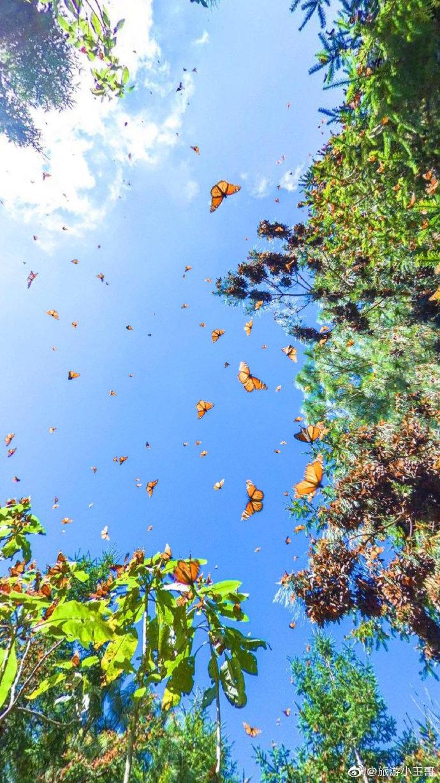 墨西哥蝴蝶谷无水印视角