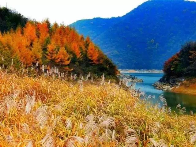 重庆这座不知名小镇,竟藏着媲美川西秋色!