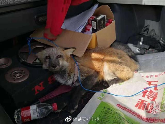 大型真香现场之股神篇_北京三分彩是真的假的
