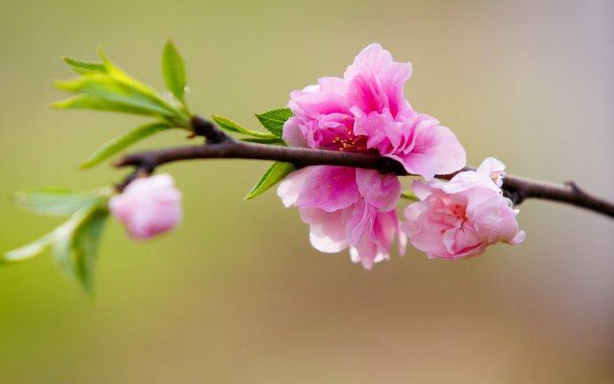 随笔:在桃花香满衣的季节里