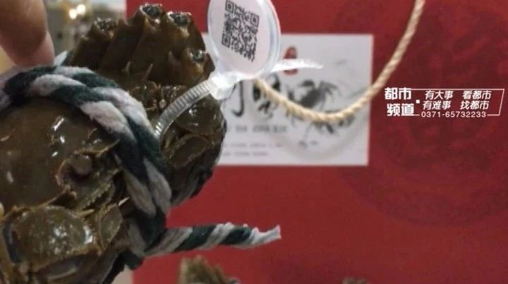 市面上99%阳澄湖大闸蟹都是假的 仅需1元就能造