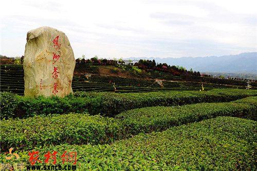 陕西鹏翔茶业股份有限公司