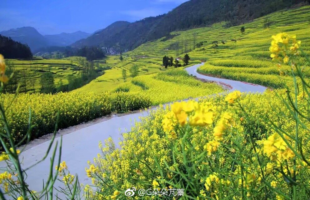 中国最早的春天 云?#19979;?#24179;30万亩的油菜花