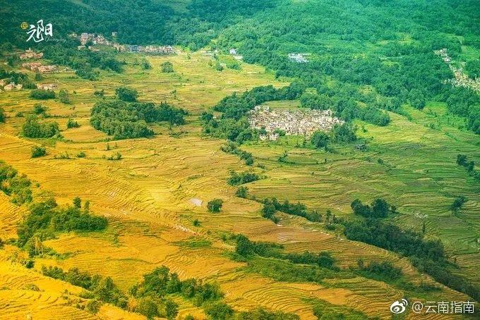 秋天,元阳梯田的稻谷成熟,随着山势的起伏