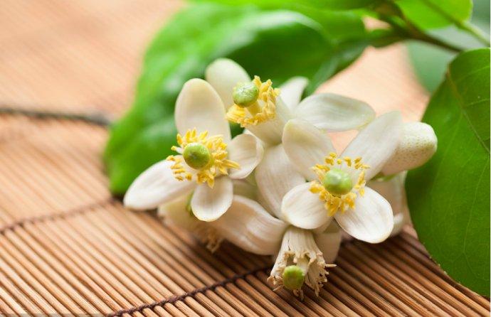 散文:在春暖中习惯一个人静静地走