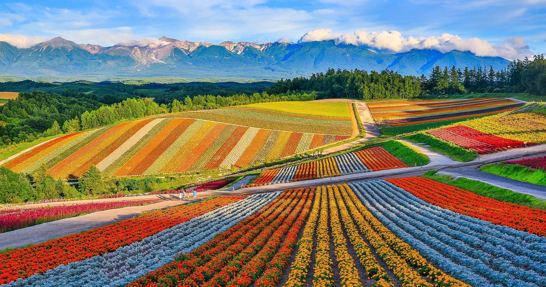 七彩富良野,多彩日本