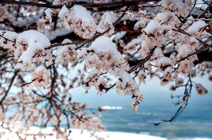 新疆杏花沟,美如画的四月天