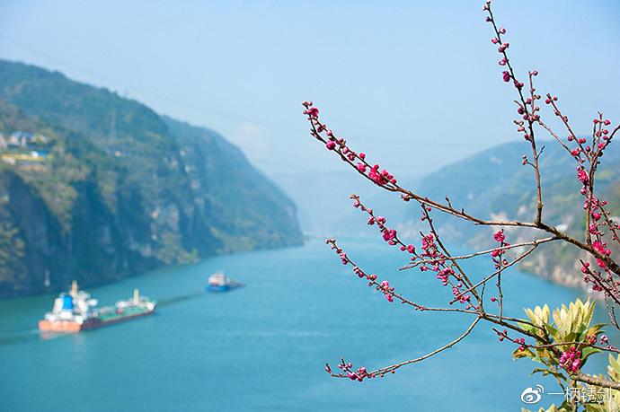 春到长江,西陵峡口赏花看景正当时
