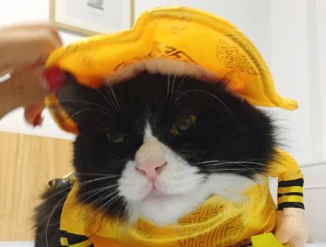 """猫咪穿上""""皇袍""""威武霸气,但它听到小伙伴的悄悄话后,瞬间懵"""