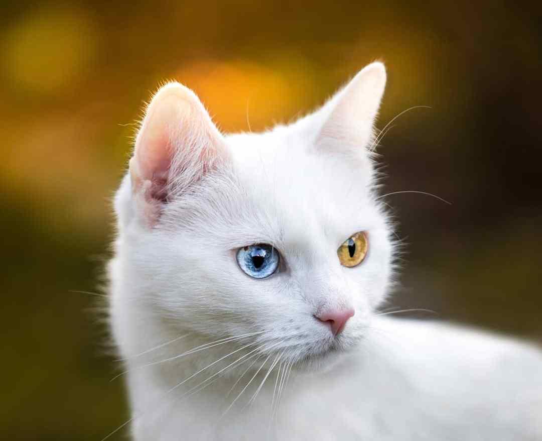 母猫快生了有哪些预兆?