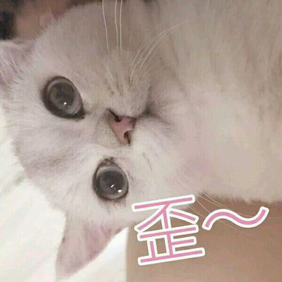 撩男朋友的大全指甲30张可爱猫咪图案表情包表情图片