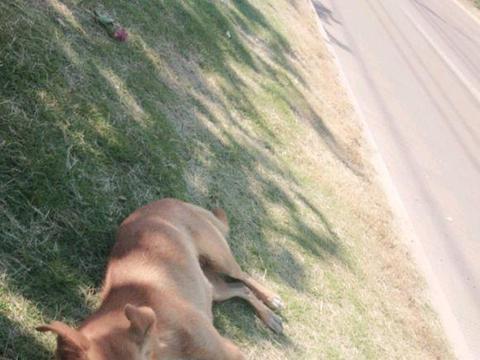 女孩坐在路边看风景,一只流浪狗跑过来伴她左右,一人一狗,足矣