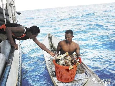 3月1日起,八个国家开始对加勒比刺龙虾进行区域禁令!
