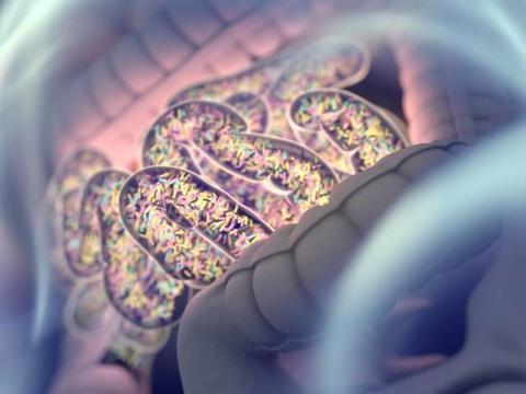 肠道的微生物会影响你的免疫系统,牛奶过敏可能与肠道菌群有关