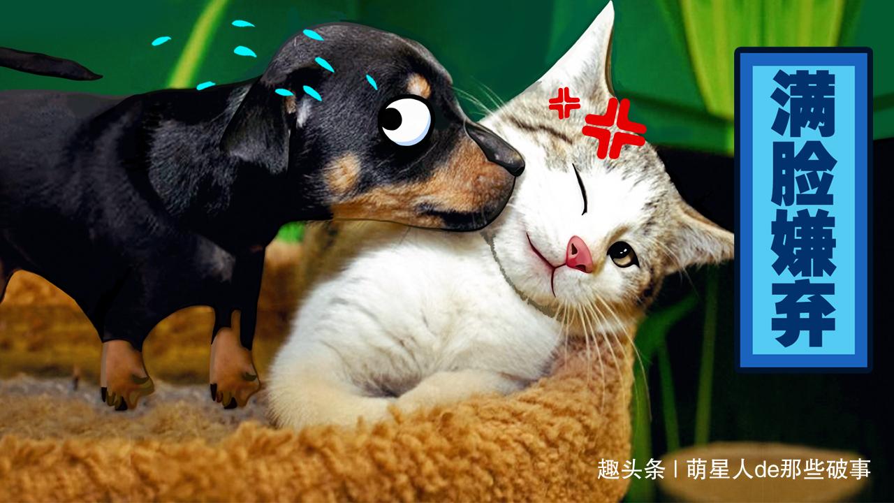 天天要和狗做爱_猫和狗天天打架,愁怀铲屎官,了解这4点原因后轻松解决