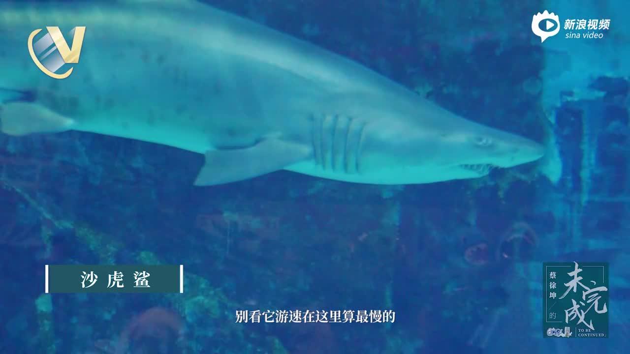 《蔡徐坤的未完成》第八期:对话海底世界上集