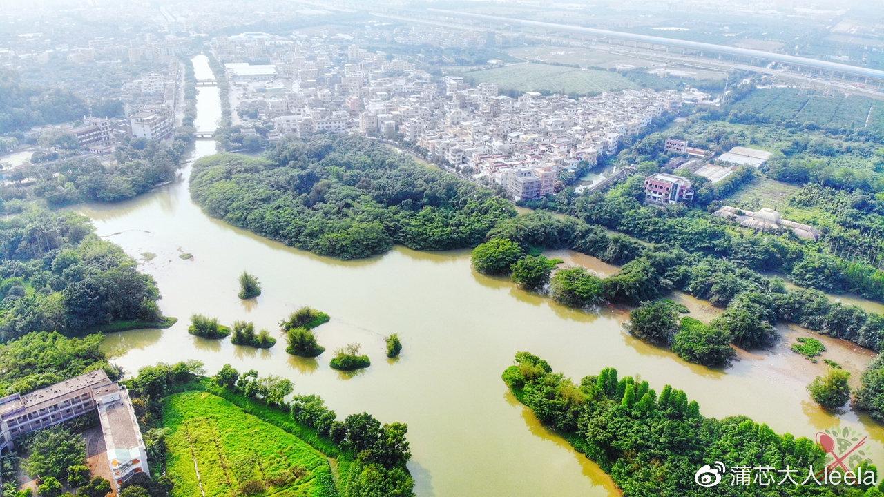 1棵500年榕树占地20亩,100多种鸟类的乐园,就是广东的小鸟天堂