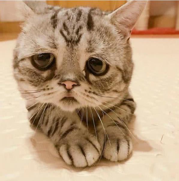 猫咪撒娇讨吃,憋屈模样可爱,主人:瞧你那样,都给你