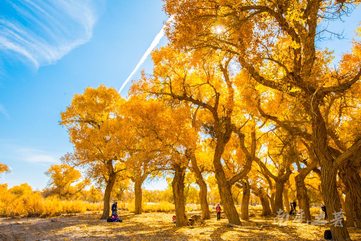 全世界仅存的三大胡杨林,这个离我们最近
