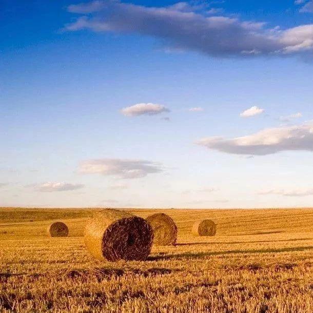 我省农民收入有望增加!这项改革吉林省将整省试点