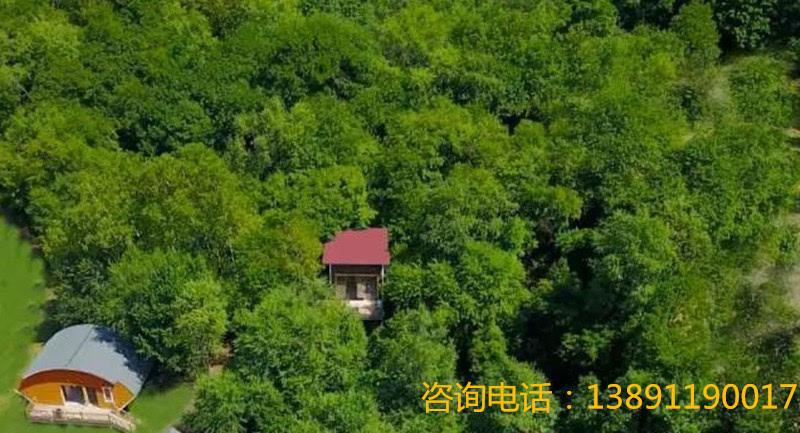 """2019树顶漫步发起首届""""笔记自然 """"大赛!"""
