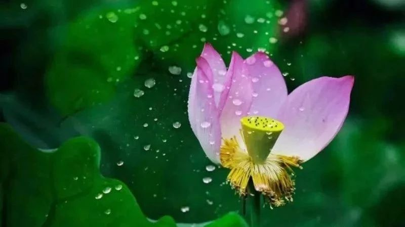 谁说梅雨季节不适合旅行 台州游玩攻略戳这里