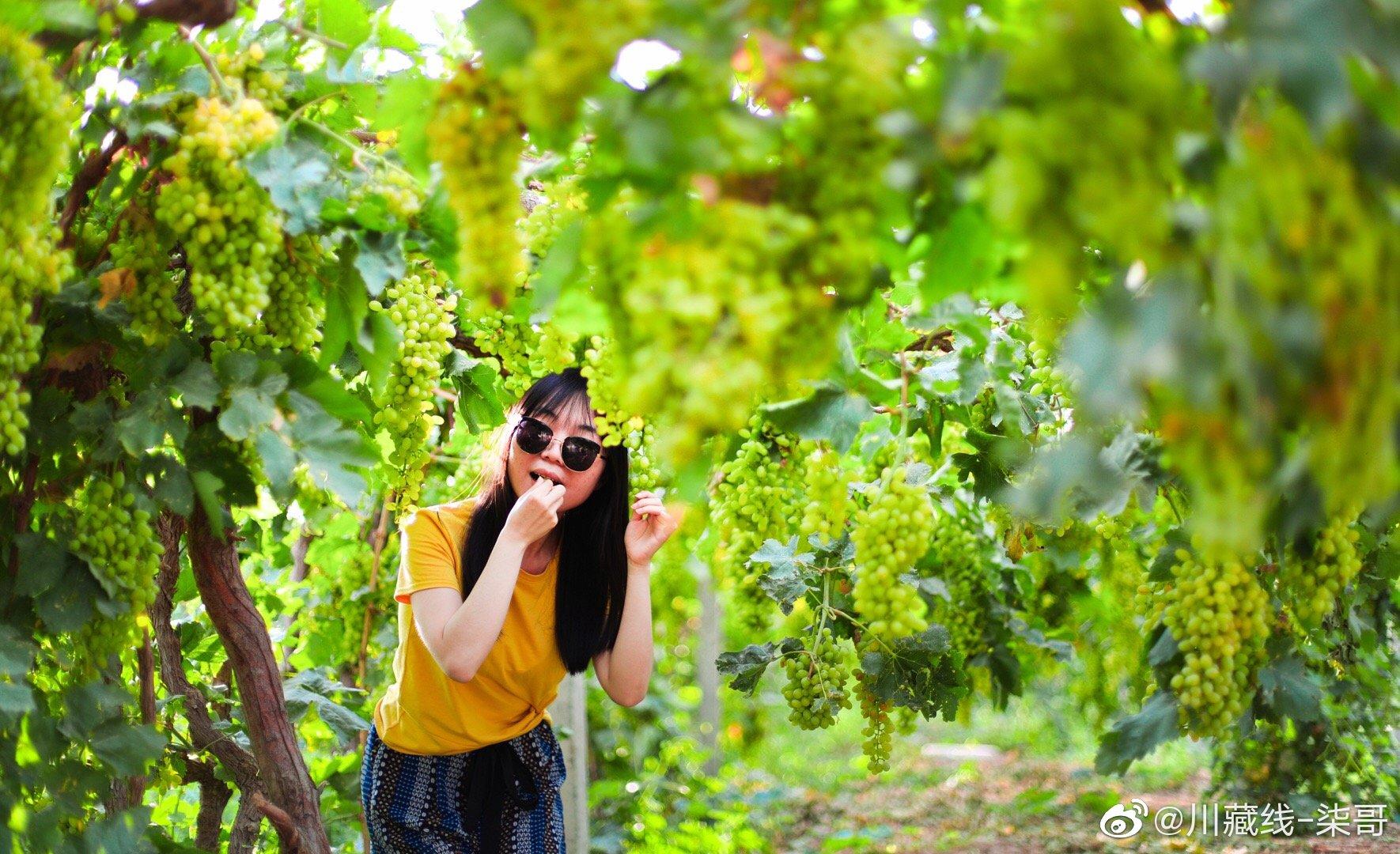 吐鲁番的普通熟了 好多好多的葡萄特别的甜