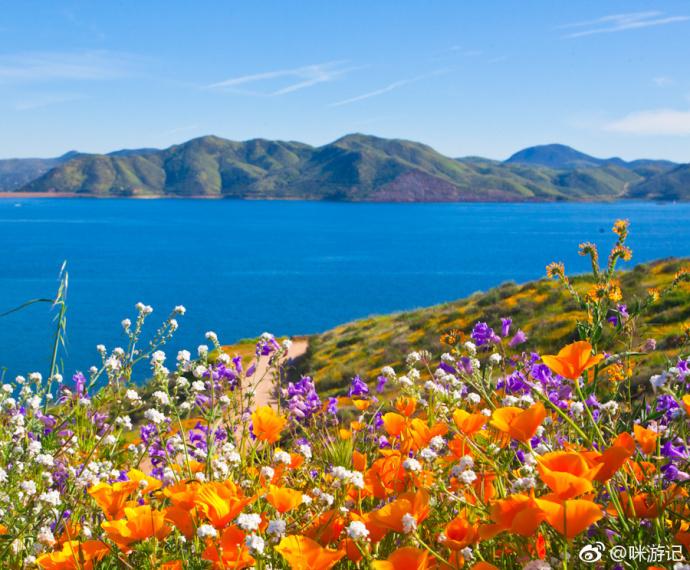 看野花不必总是泸沽湖格桑花