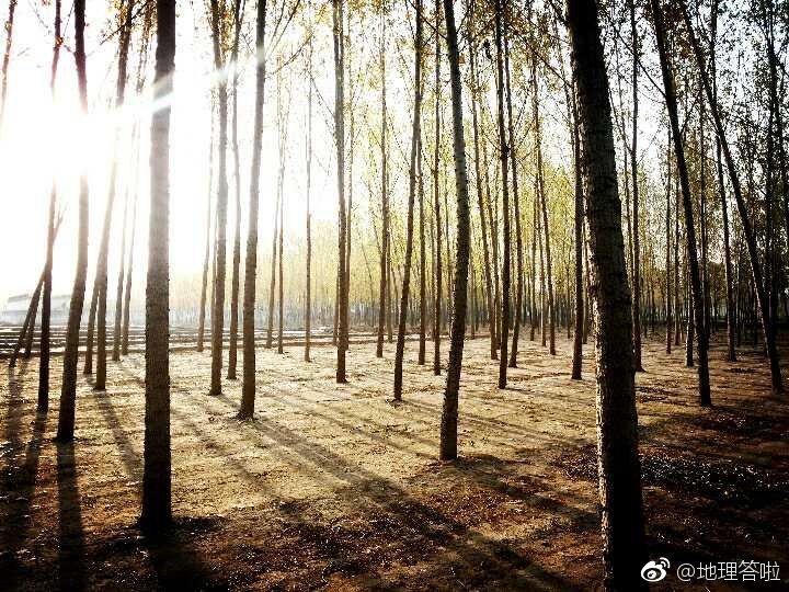 阳春四月,济南北部, 大平原上乡村的清晨, 万物滋长