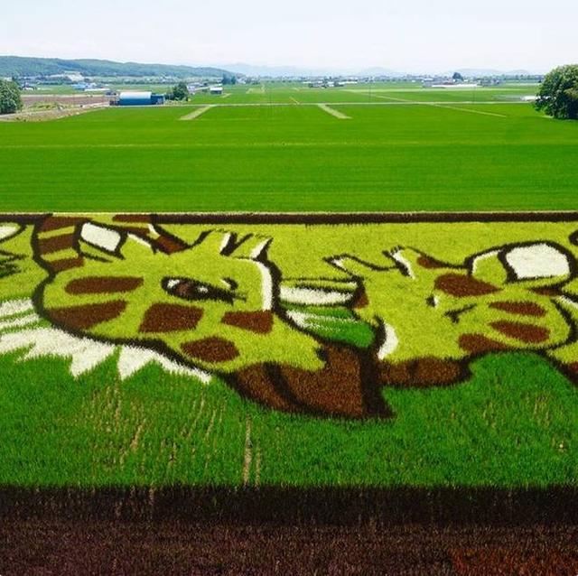 相信我这是真的,中国游客拍到的日本田野里神秘图案,佩服.