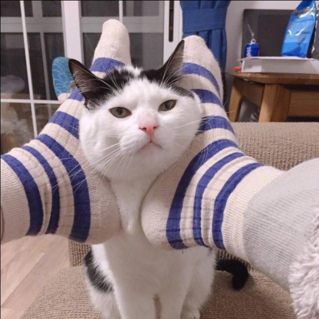 情侣头像搞怪可爱卖萌宠物猫咪
