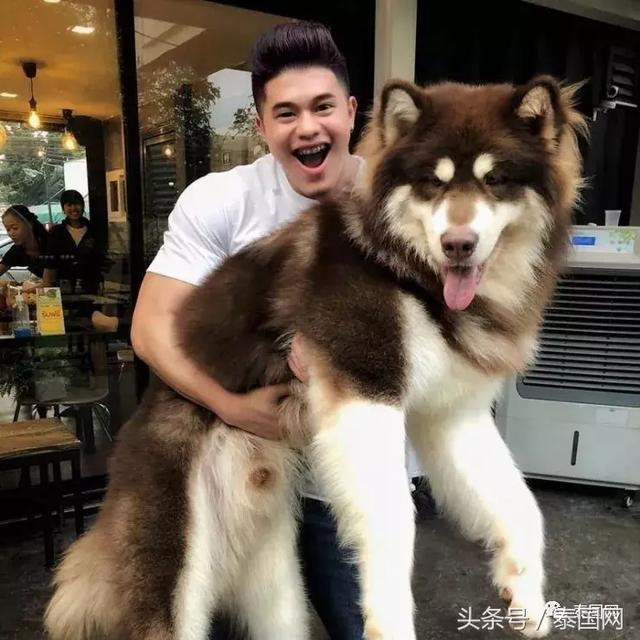 因狗狗战胜抑郁症,泰国美女开了一间大狗狗咖
