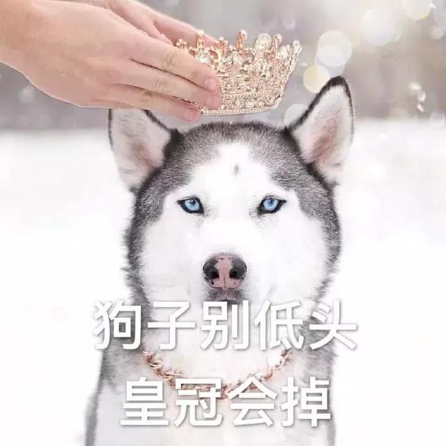 表情包:想吃肉肉|狗子|小仙女|表情包_新浪网图片