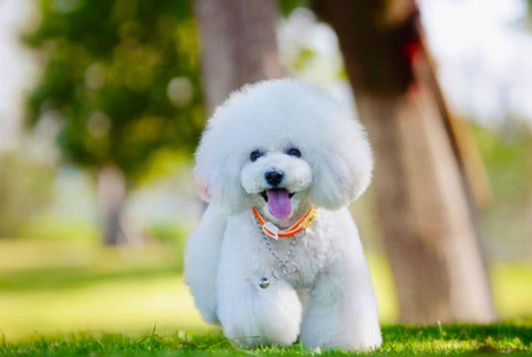 假如让你选一只宠物狗领养,你会选哪只?果断选择第四只!
