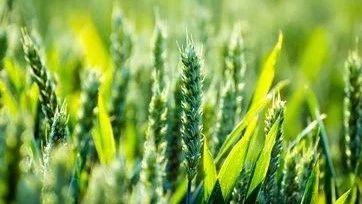 全国农业产业强镇示范建设名单公布 河南14地入选