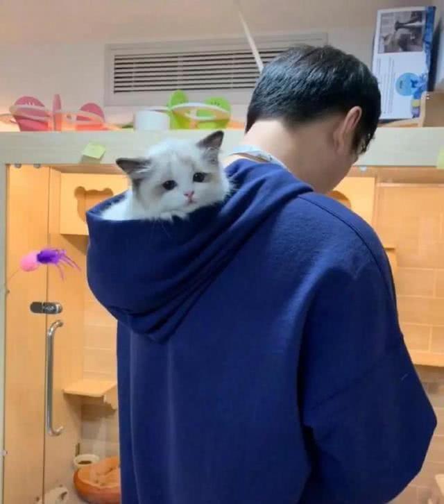 王思聪又有新宠,这只布偶猫价值20万,网友:猫下崽不?