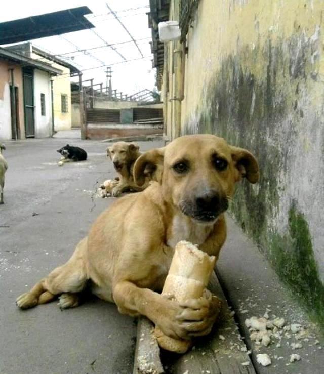 养狗是一辈子的事情,养了就不要抛弃!
