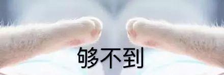 猫咪牵手表情包:牵宝宝的手图片