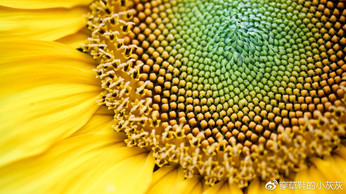 微眼看世界,记录不一样的自然之美