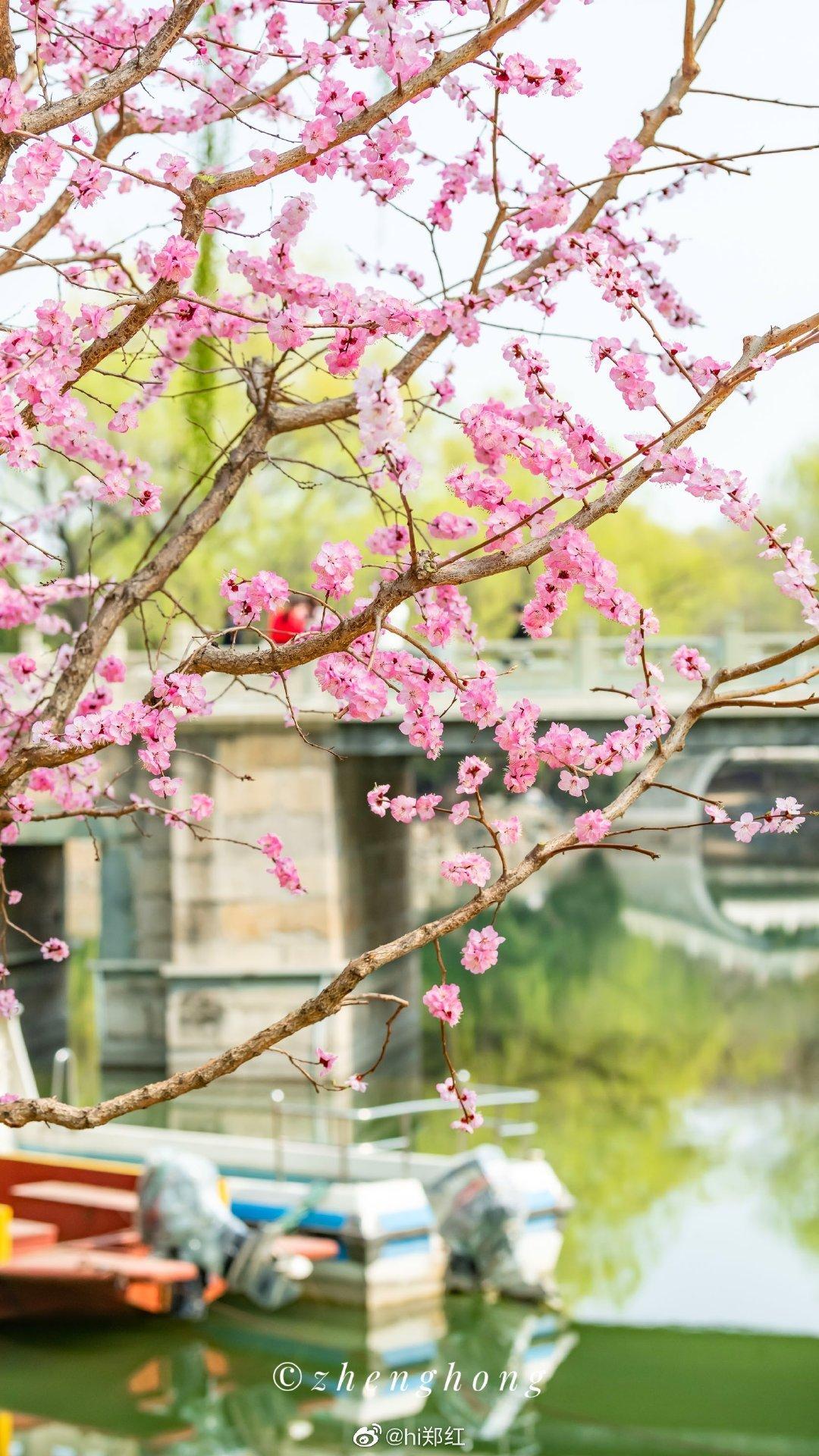 颐和园春光明媚 桃红柳绿漫西堤