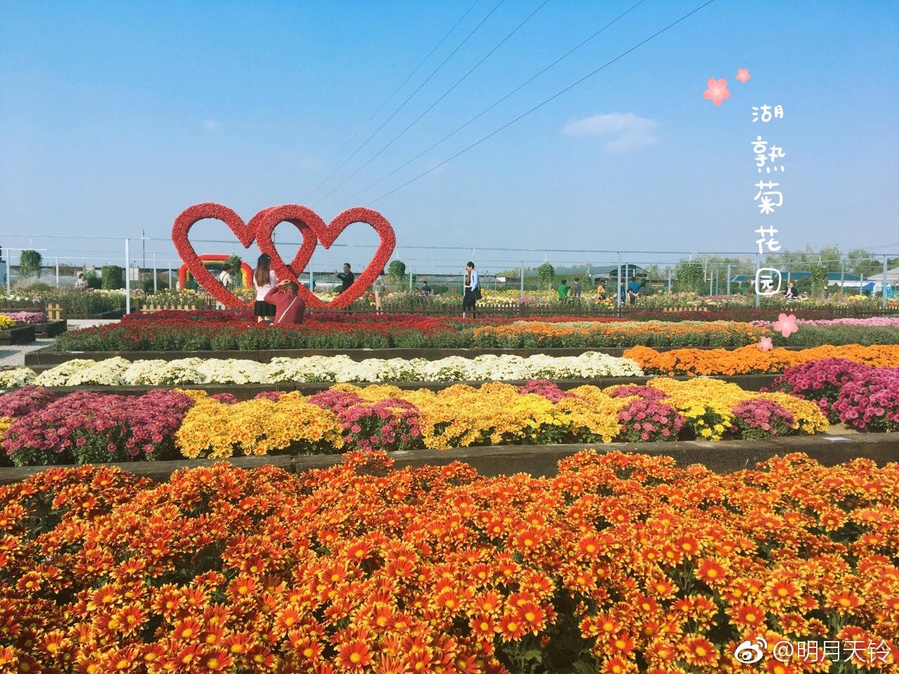 霜降后的南京秋色
