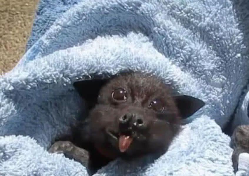蝙蝠表情分享展示图片