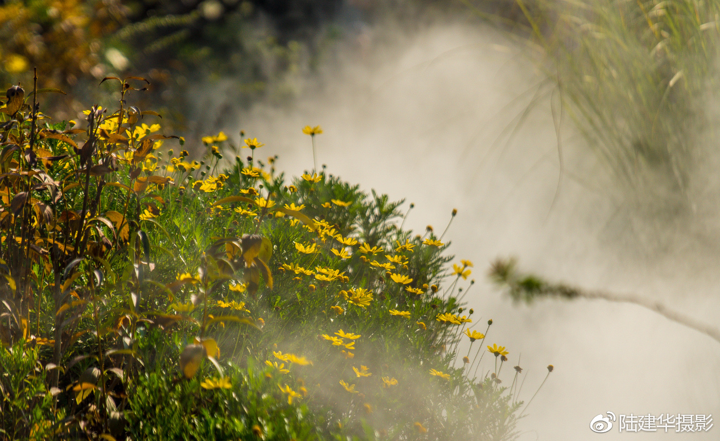 立秋 夏的绿荫中飘落的一首诗
