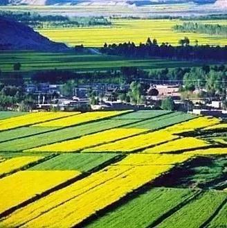 河南14个乡镇入选全国农业产业强镇示范建设名单