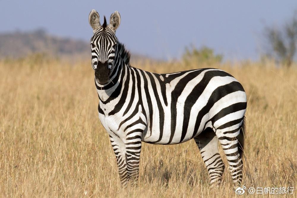 肯尼亚 保护区里的野性假期