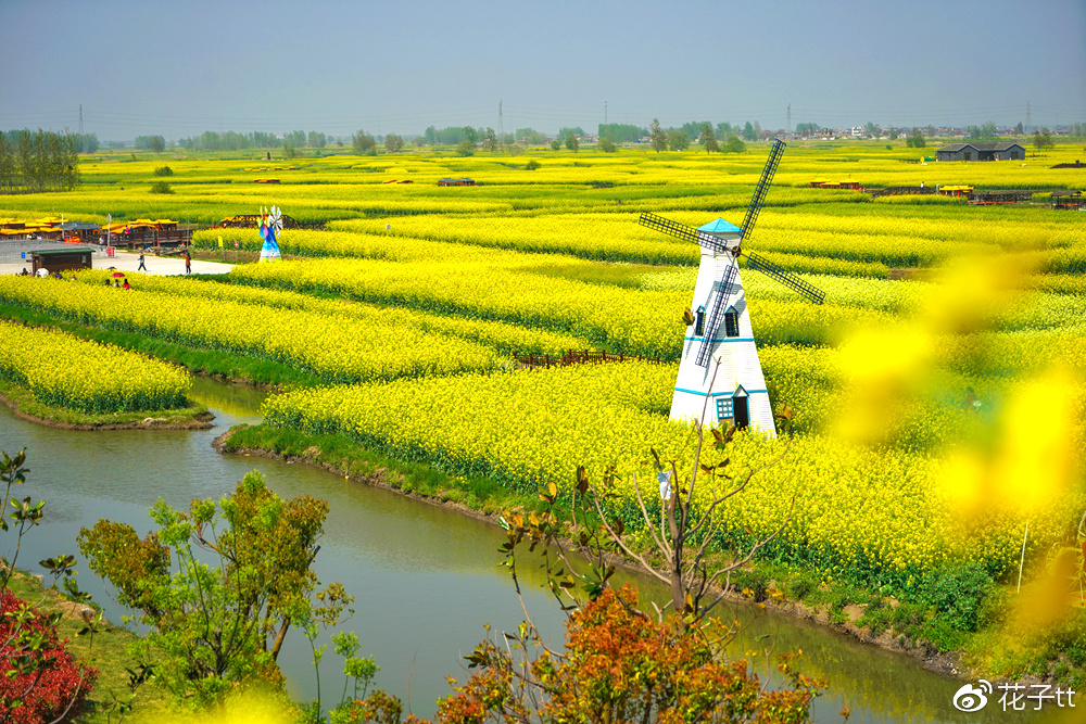 【兴化油菜花攻略】身临水中央,萦绕千垛黄
