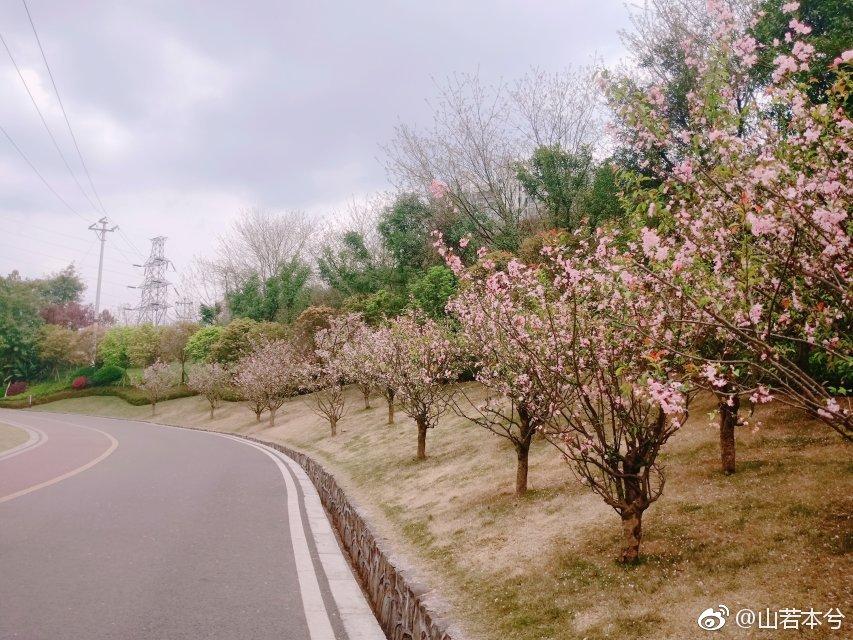 三月内江 明媚阳光