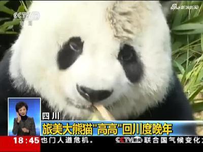 """四川:旅美大熊猫""""高高""""回川度晚年"""