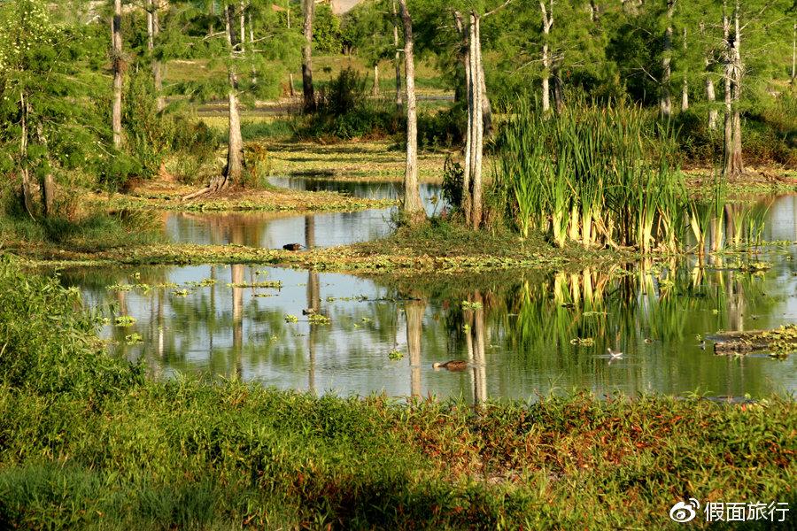 一旦错过就没机会看到的美景——大沼泽地国家公园攻略